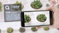 如何快速识别拍到的新植物?